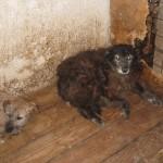 Berry, damals im Shelter :'(