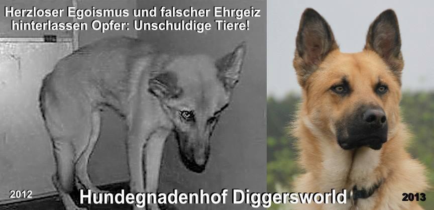 Herzloser Egoismus und falscher Ehrgeiz hinterlassen Opfer: Unschuldige Tiere! Anton 2012 und 2013