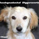 Chippi