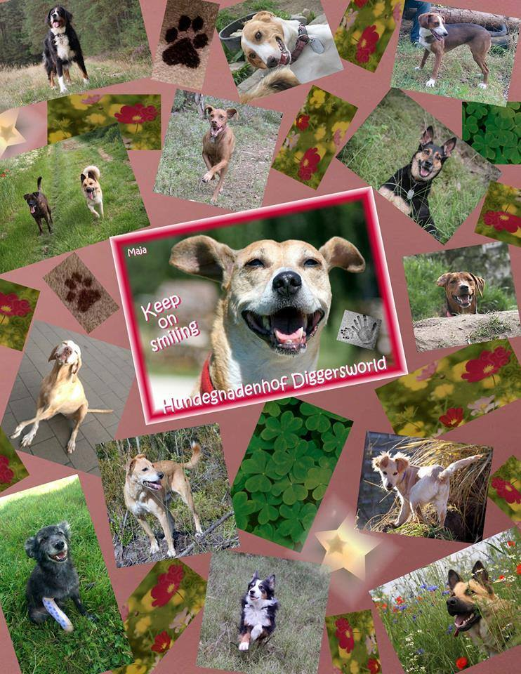 Hunde-Collage Feb. 2015