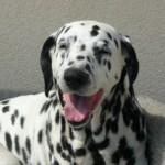 Lachender Hund 01