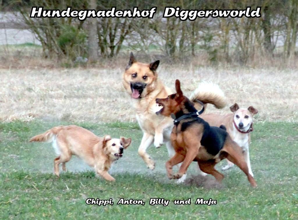 Hunde am Toben