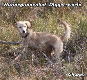 Chippi bei der Gassirunde vom 3. April