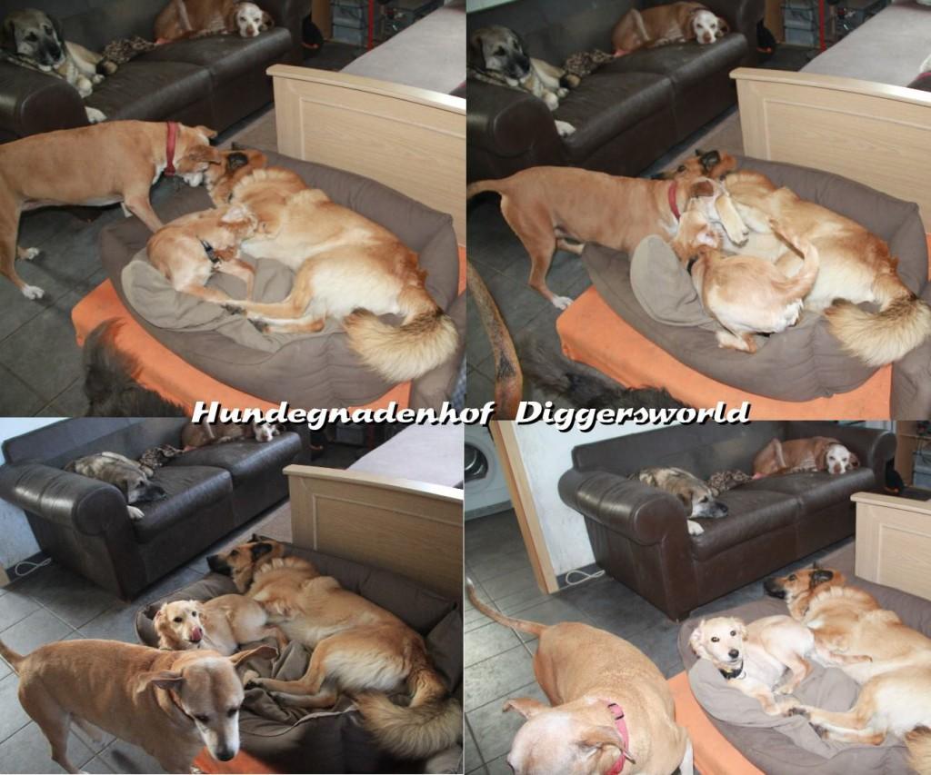 Chippi mit Anton, Maja und Mia