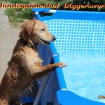 Chippi am Pool