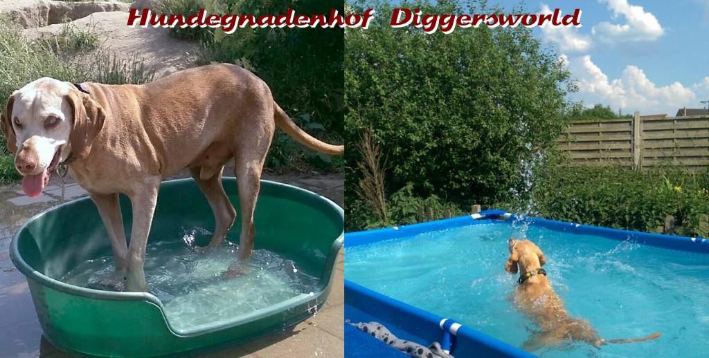 Bakacs beim Wassertreten und Lexie wie immer im Pool