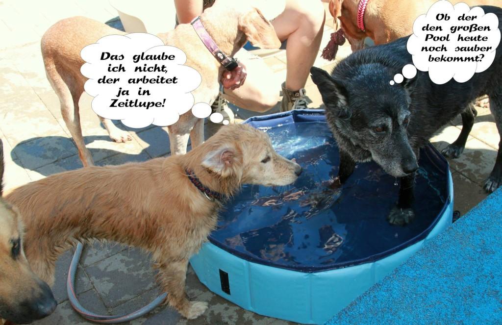 Comic mit Chippi (Das glaub ich nicht, der arbeitet ja in Zeitlupe!) und Ella (Ob der den großen Pool heute noch sauber bekommt?)