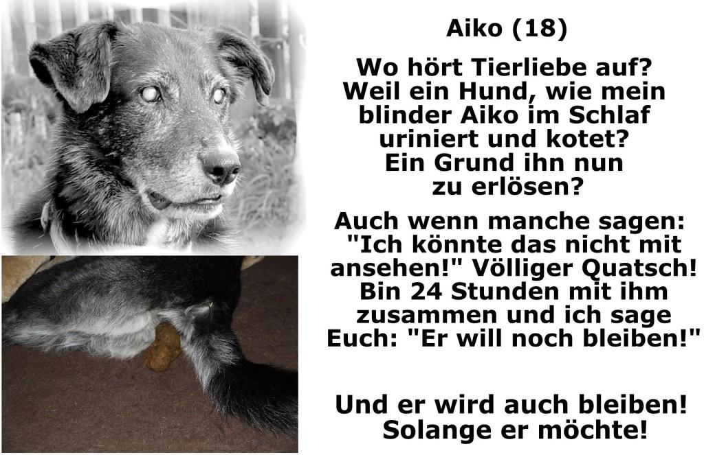 """Weil ein Hund, wie mein blinder Aiko, im Schlaf uriniert und kotet? Ein Grund ihn nun zu erlösen? Auch wenn manche sagen: """"Ich könnte das nicht mit ansehen!"""" Völliger Quatsch! BIn 24 Stunden mit ihm zusammen und ich sage euch: """"Er will noch bleiben!"""" Und er wird auch bleiben. So lange er möchte."""