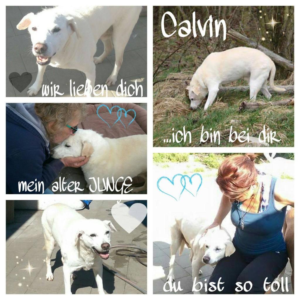 Calvins Collage