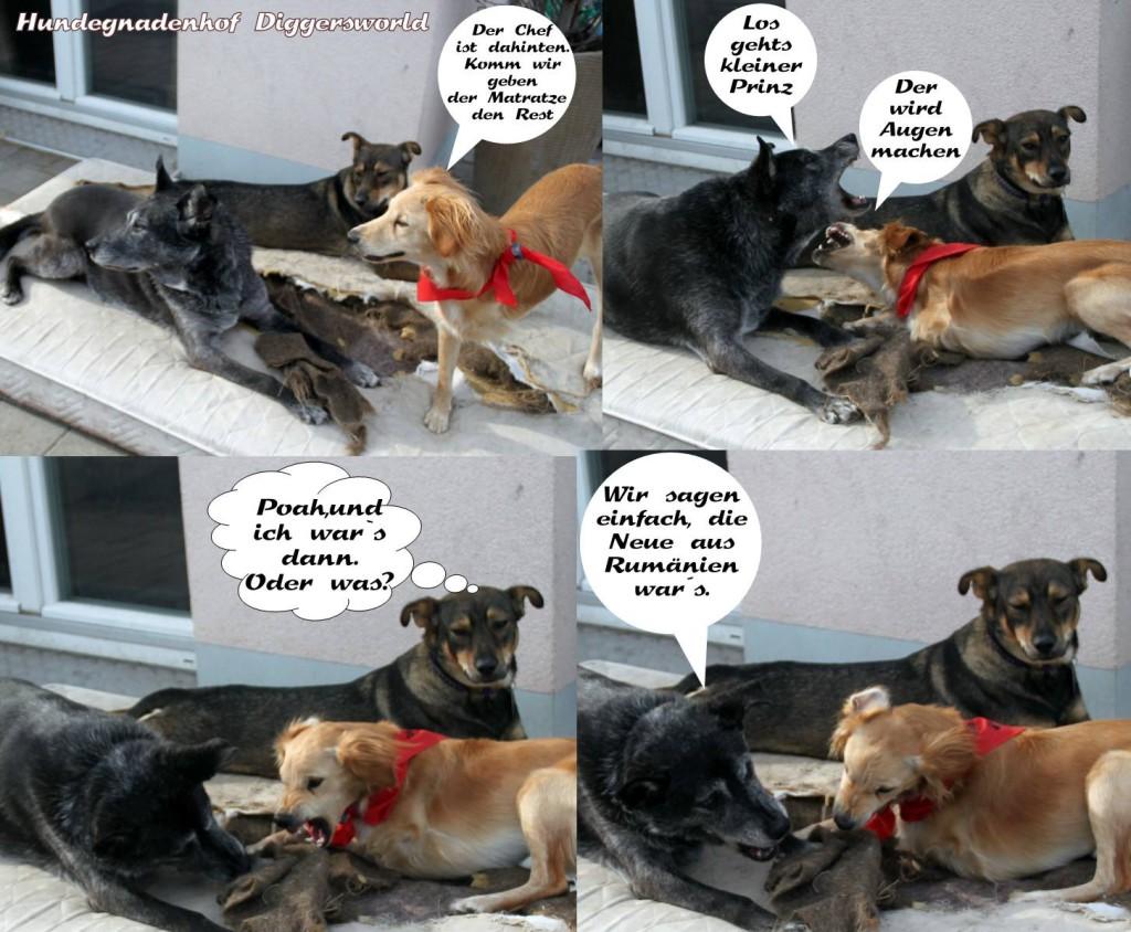 Comic mit ELLA, CHIPPI und MINKA