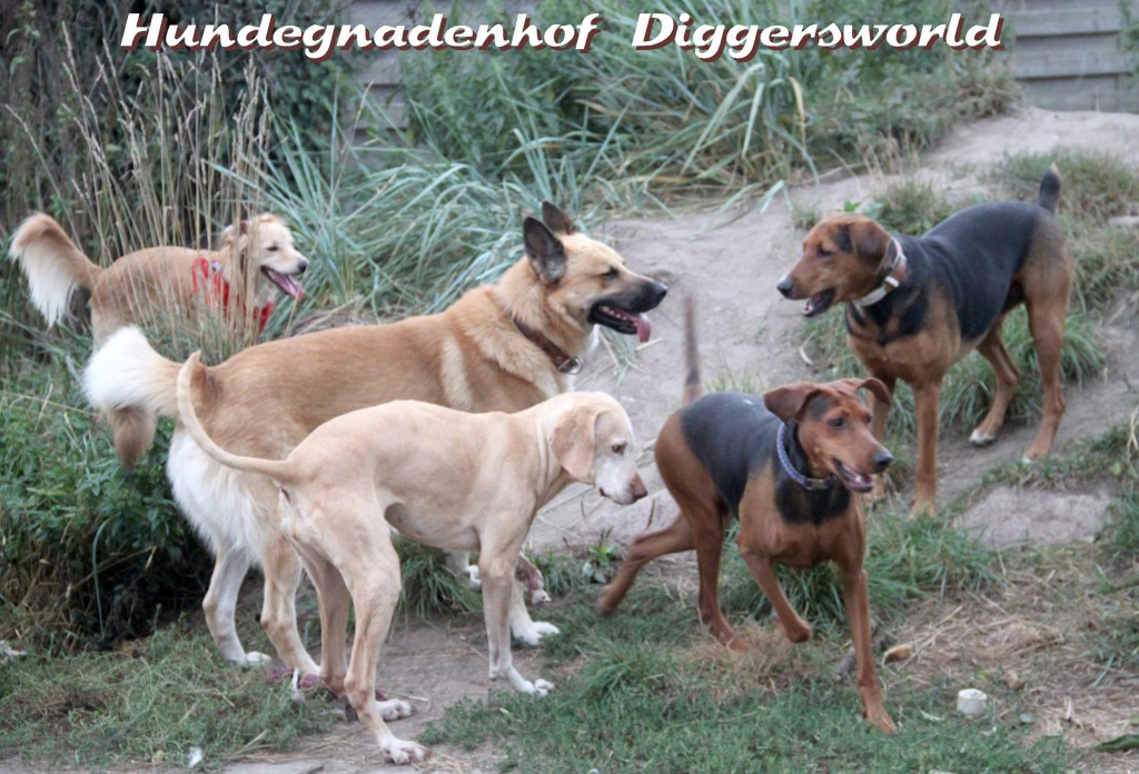 Chippi, Anton, Billy, Lexie und Xenna