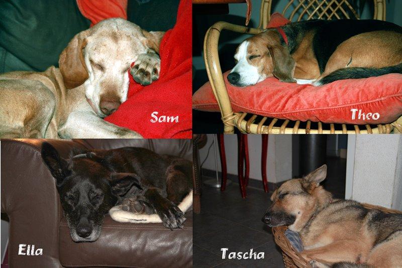 Am Schlummern: Sam, Theo, Ella und Tascha