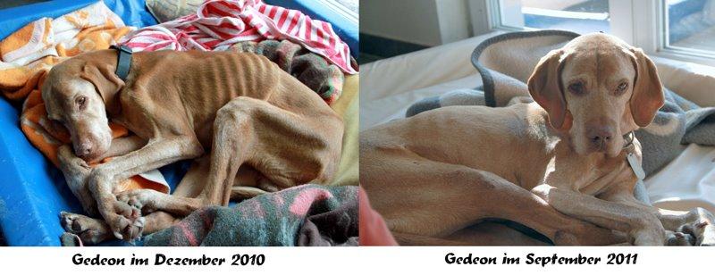 Gedeon 2010 und im Vergleich 2011