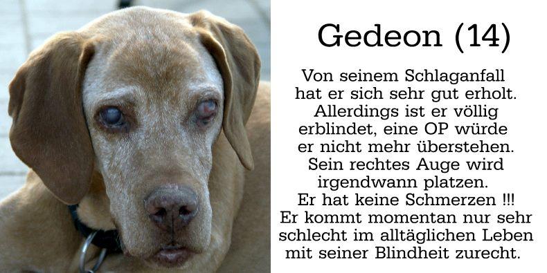 Gedeon (14) Von seinem Schlaganfall hat er sich sehr gut erholt. Allerdings ist er völlig erblindet, eine OP würde er nicht mehr überstehen. Sein rechtes Auge wird irgendwann platzen. Er hat keine Schmerzen! Er kommt momentan nur sehr schlecht im alltäglichen Leben mit seiner Blindheit zurecht.