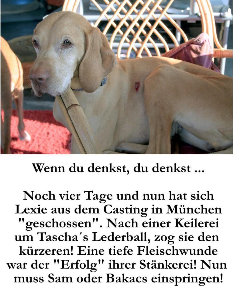 """Noch vier Tage und nun hat sich Lexie aus dem Casting in München """"geschossen"""". Nach einer Keilerei um Taschas Lederball zog sie den Kürzeren. Eine tiefe Fleischwunde war der """"Erfolg"""" ihrer Stänkerei. Nun muss Sam oder Bakacs einspringen."""