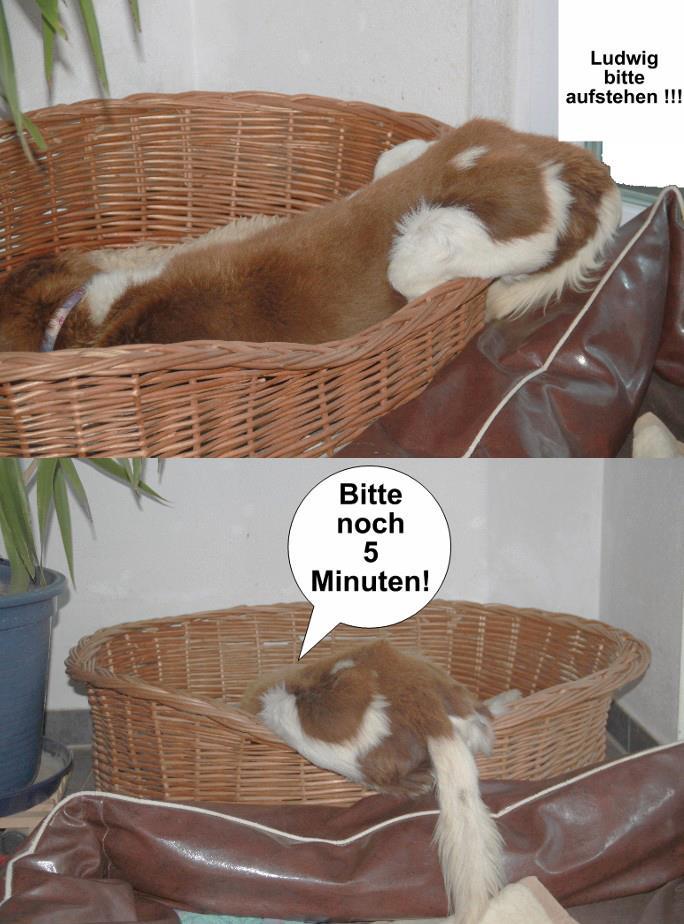 Comic mit Ludwig: Bitte noch 5 Minuten!
