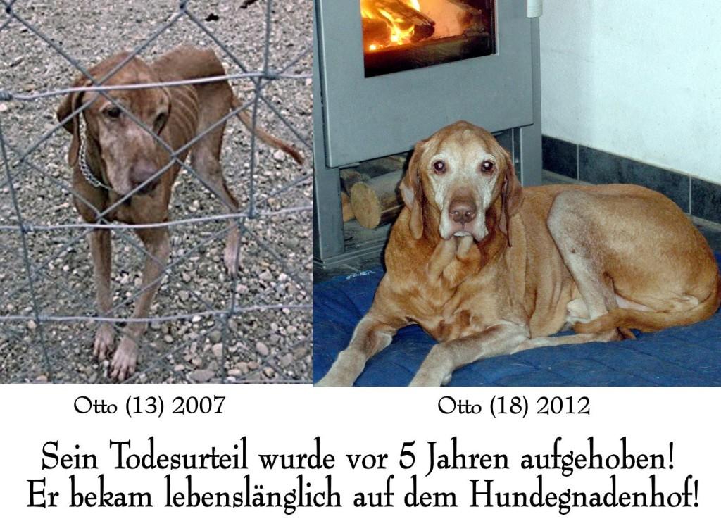 Otto 2007 und 2012 im Vergleich - Sein Todesurteil wurde vor 5 Jahren aufgehoben! Er bekam lebenslänglich auf dem Hundegnadenhof.