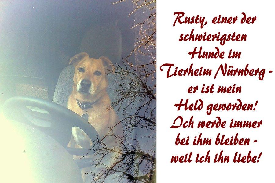 Rusty, einer der schwierigsten Hund im Tierheim Nürnberg - er ist mein Held geworden. Ich werde immer bei ihm bleiben, weil ich ihn liebe.