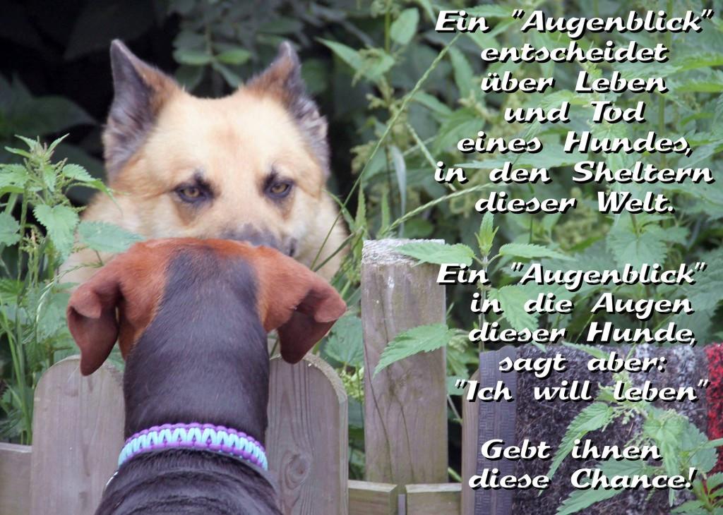 Ein Augenblick entscheidet über Leben und Tod eines Hundes in den Sheltern dieser Welt