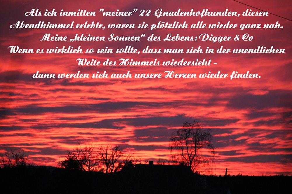 """Als ich inmitten """"meiner"""" 22 Gnadenhofhunde diesen Abendhimmel erlebte, waren sie plötzlich alle wieder ganz nah. Meine """"kleinen Sonnen"""" des Lebens: Digger & Co. Wenn es wirklich so sein sollte, dass man sich in der unendlichen Weite des Himmels wiedersieht, dann werden sich auch unsere Herzen wieder finden."""
