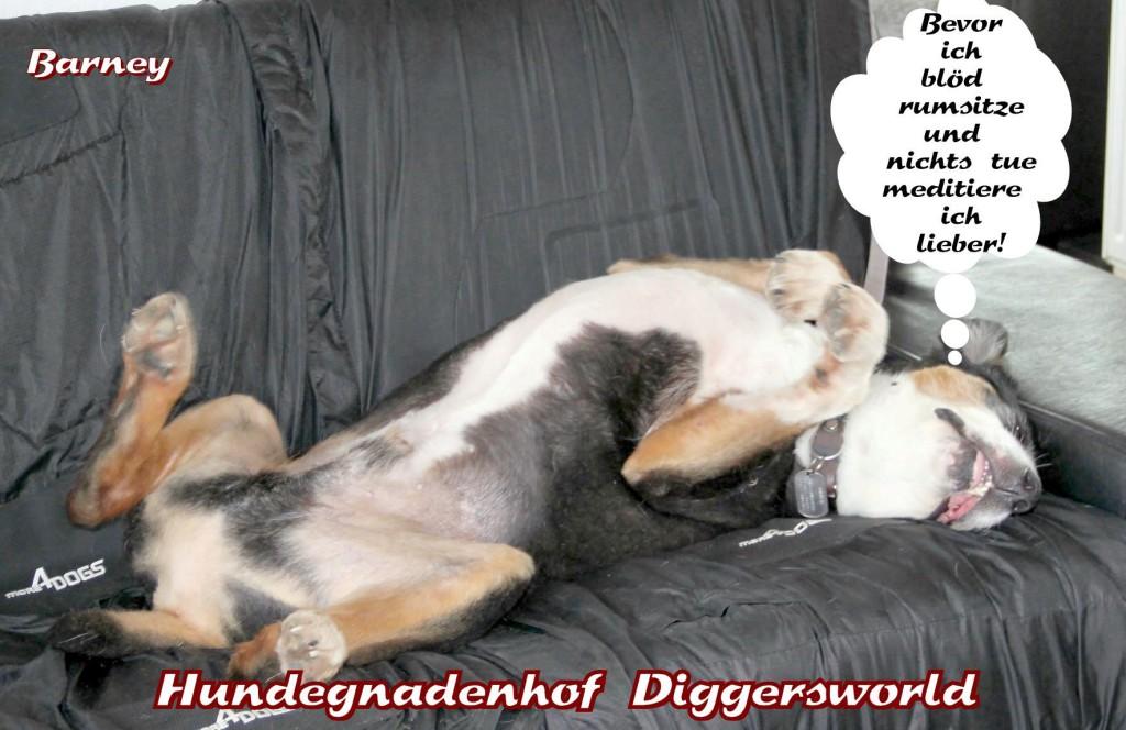 Comic mit Barney auf dem Sofa: Bevor ich blöd rumsitze und nichts tue meditiere ich lieber!