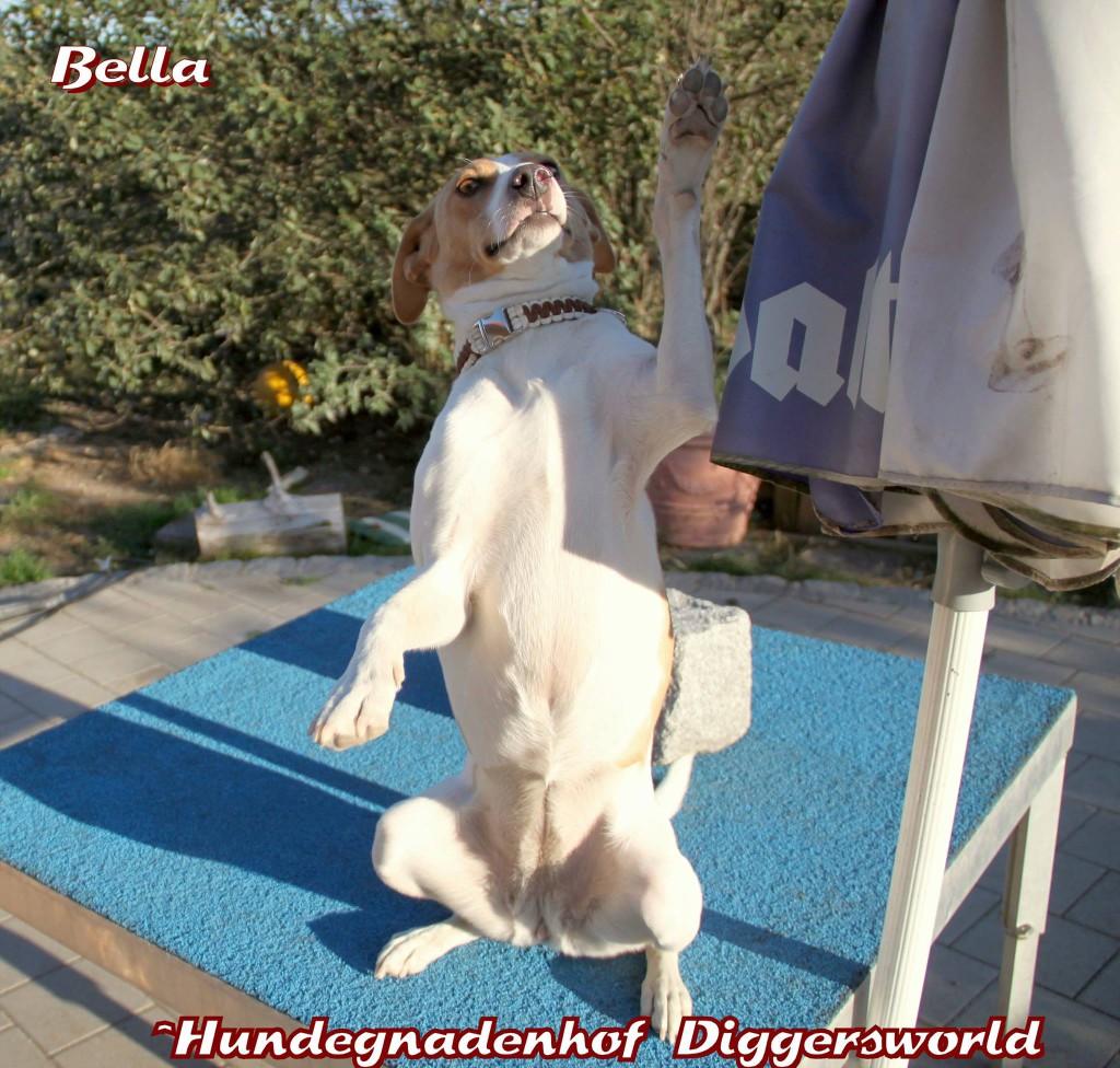 Bella grüßt