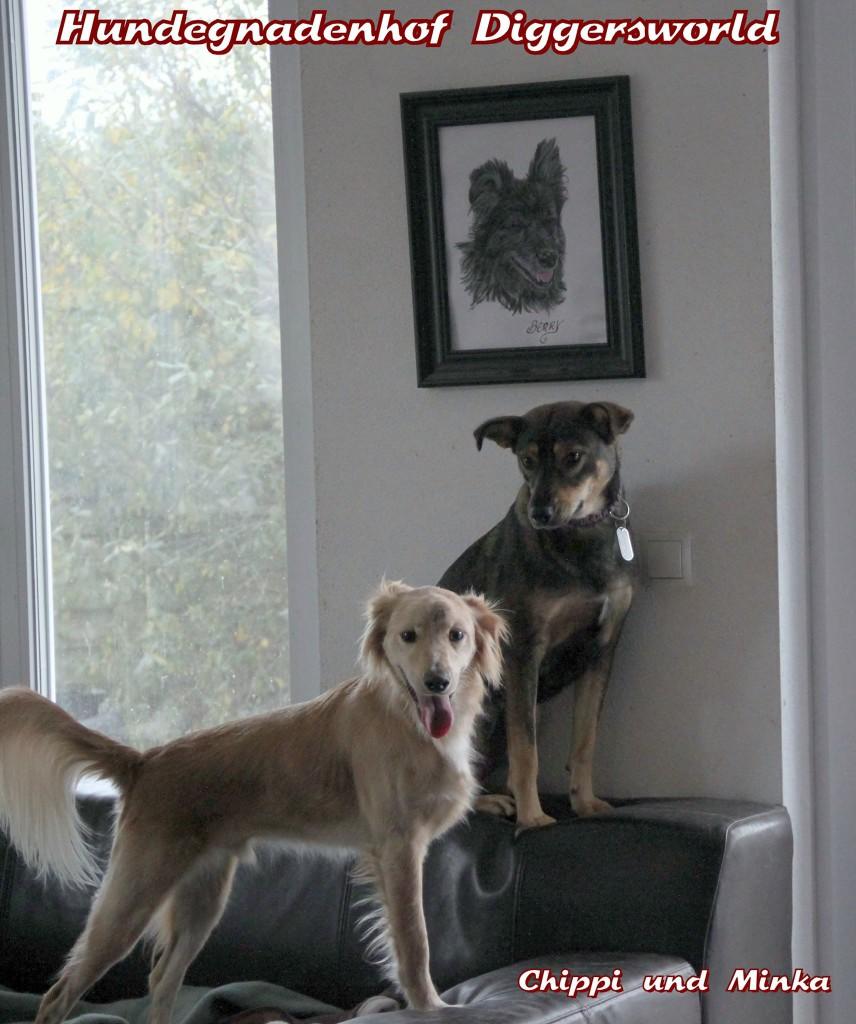 Chippi und Minka