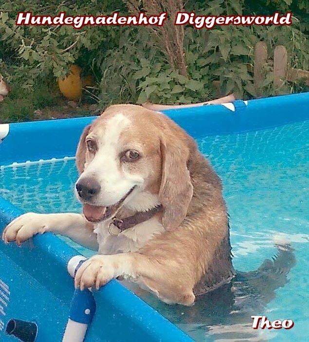 Theo im Pool