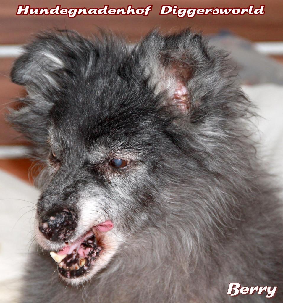 Berry, schlecht gelaunt