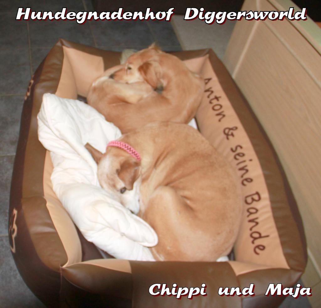 Chippi und Maja im Körbchen
