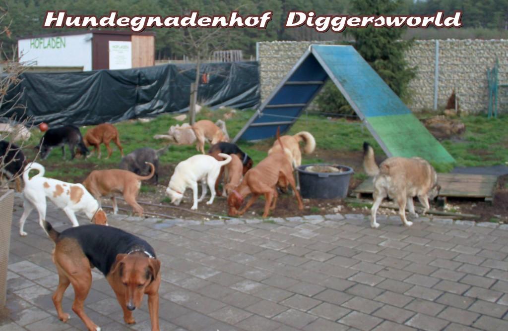 Diggersworld voller Hunde