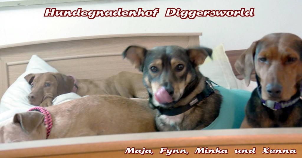 Maja, Fynn, Minka und Xenna