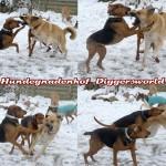 Billy, Anton und Xenna beim Toben im Schnee