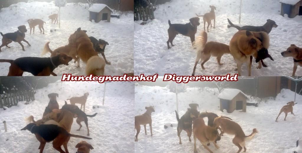 Die Bande spielt im Schnee