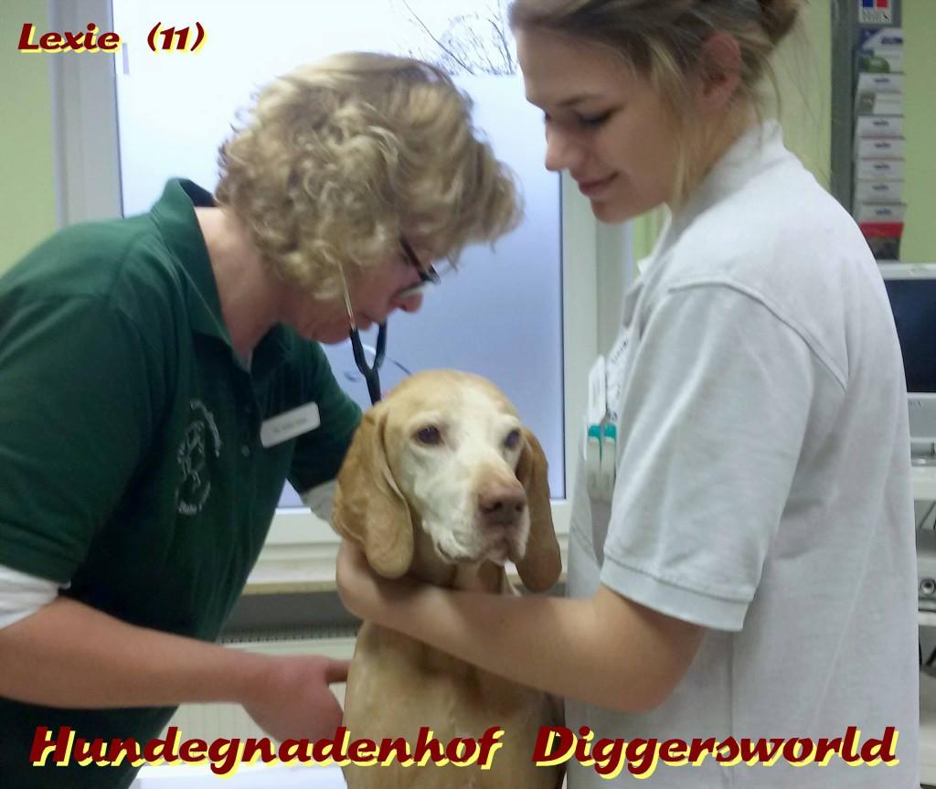 Lexie beim Tierarzt