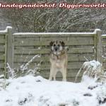 Mia auf dem verschneiten Hundeberg