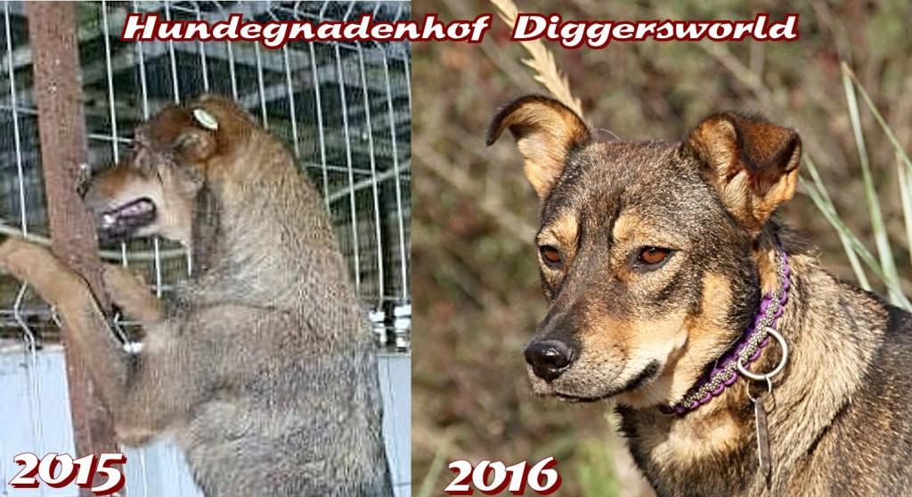 Minka, 2015 vorher und 2016 nachher