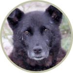 Hundebild FILL