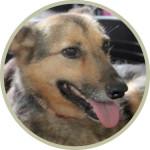 Hundebild LISA
