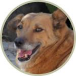 Hundebild MILA